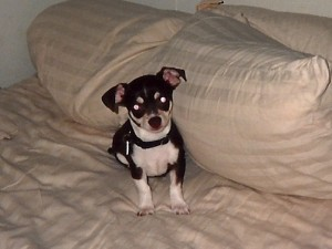 So tiny he almost got lost among the pillows!